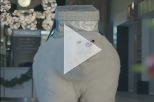 Touchwood seasonal promo ft. Bjorn the Polar Bear
